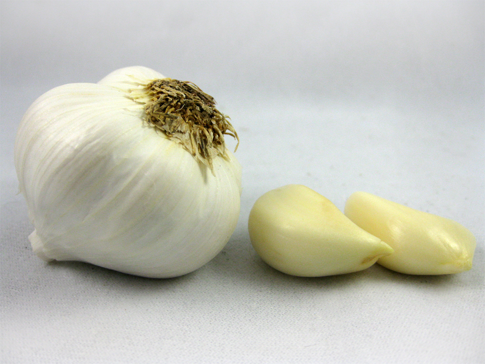 Bulb garlic