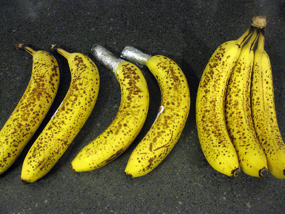 fruit ripening experiment